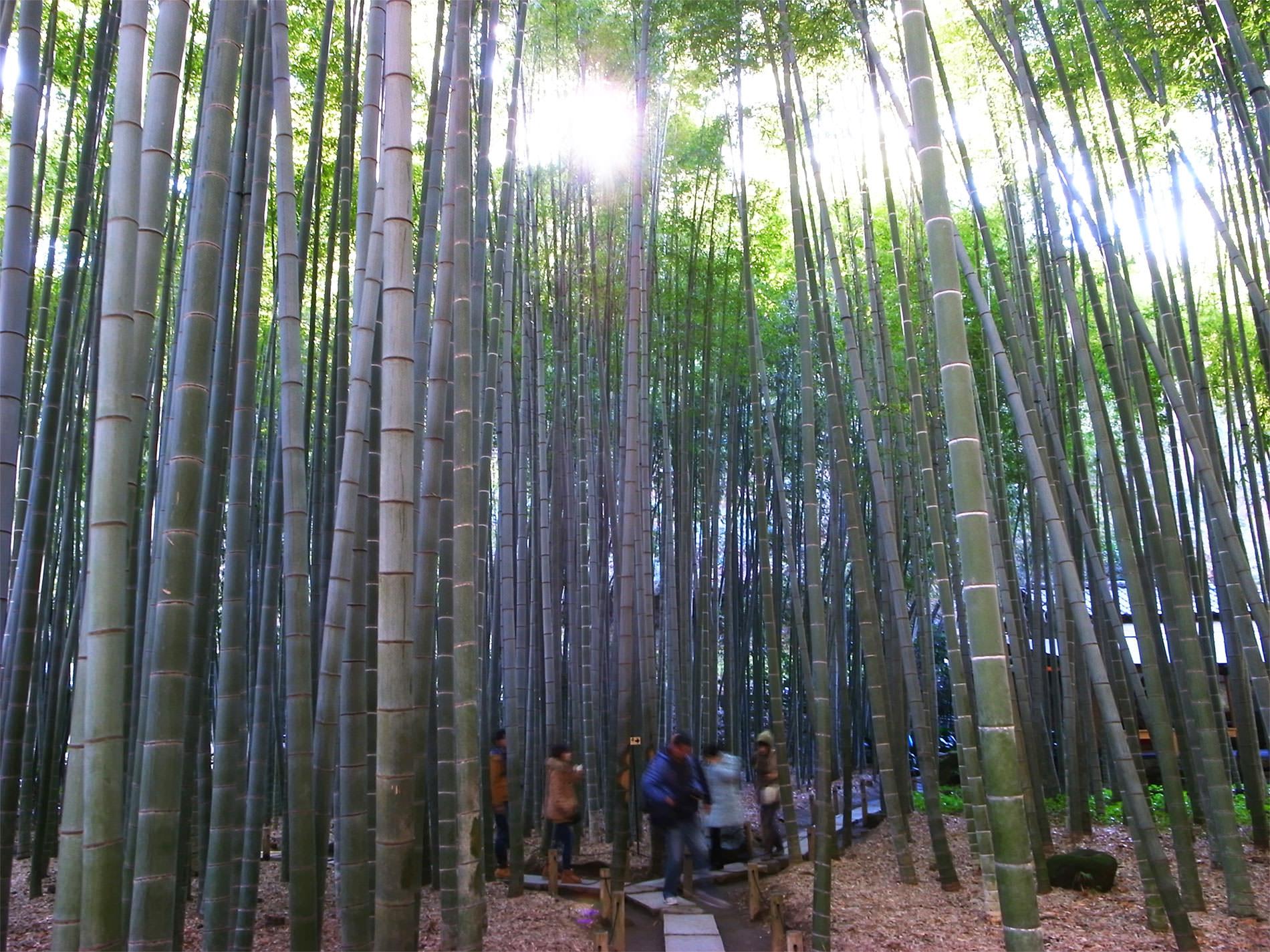 報国寺と竹林と | Hokokuji-Temple and Bamboo thicket in Kamakura
