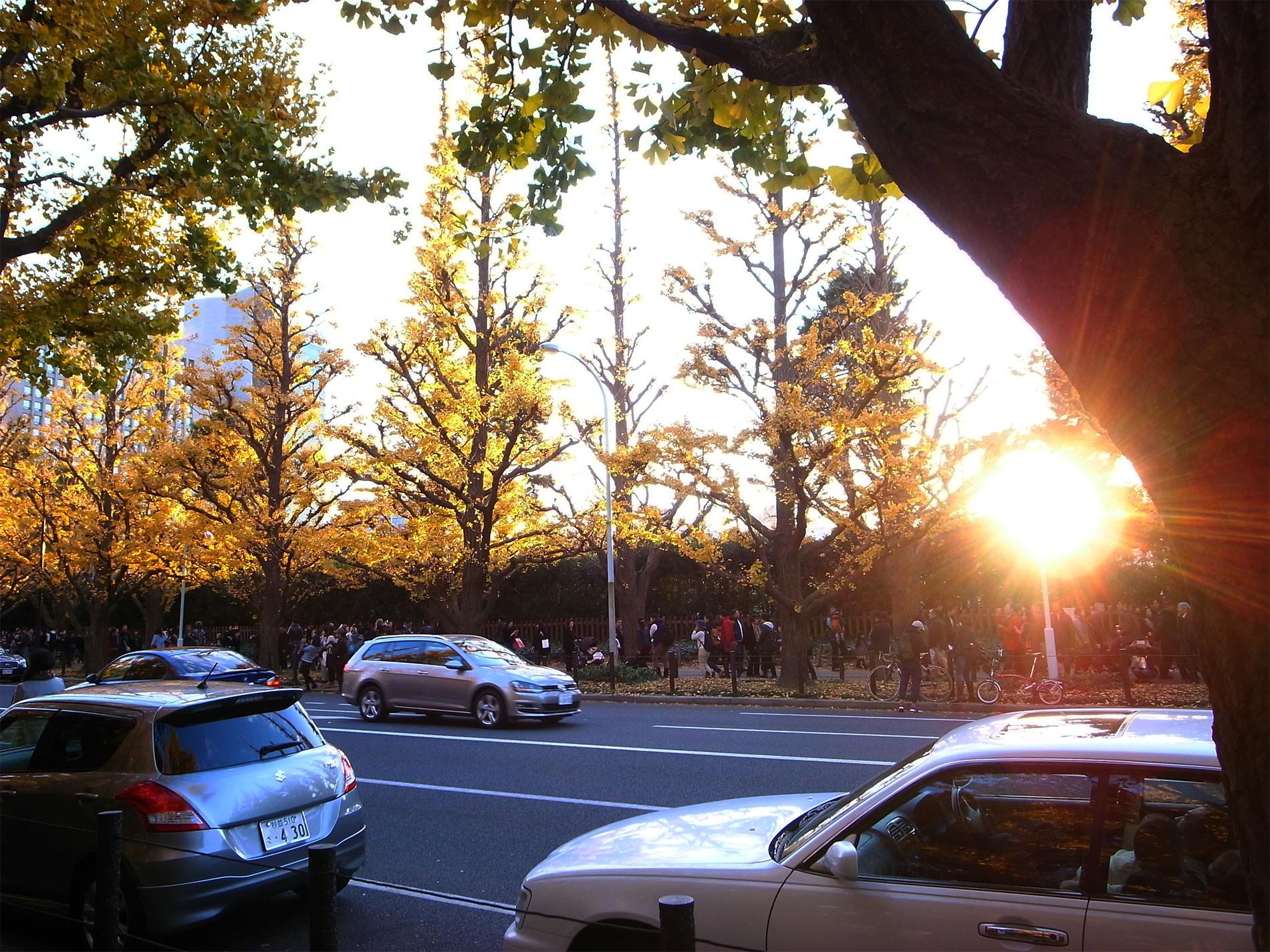 gaigen_tokyo_icyo_yellowleaves_2015