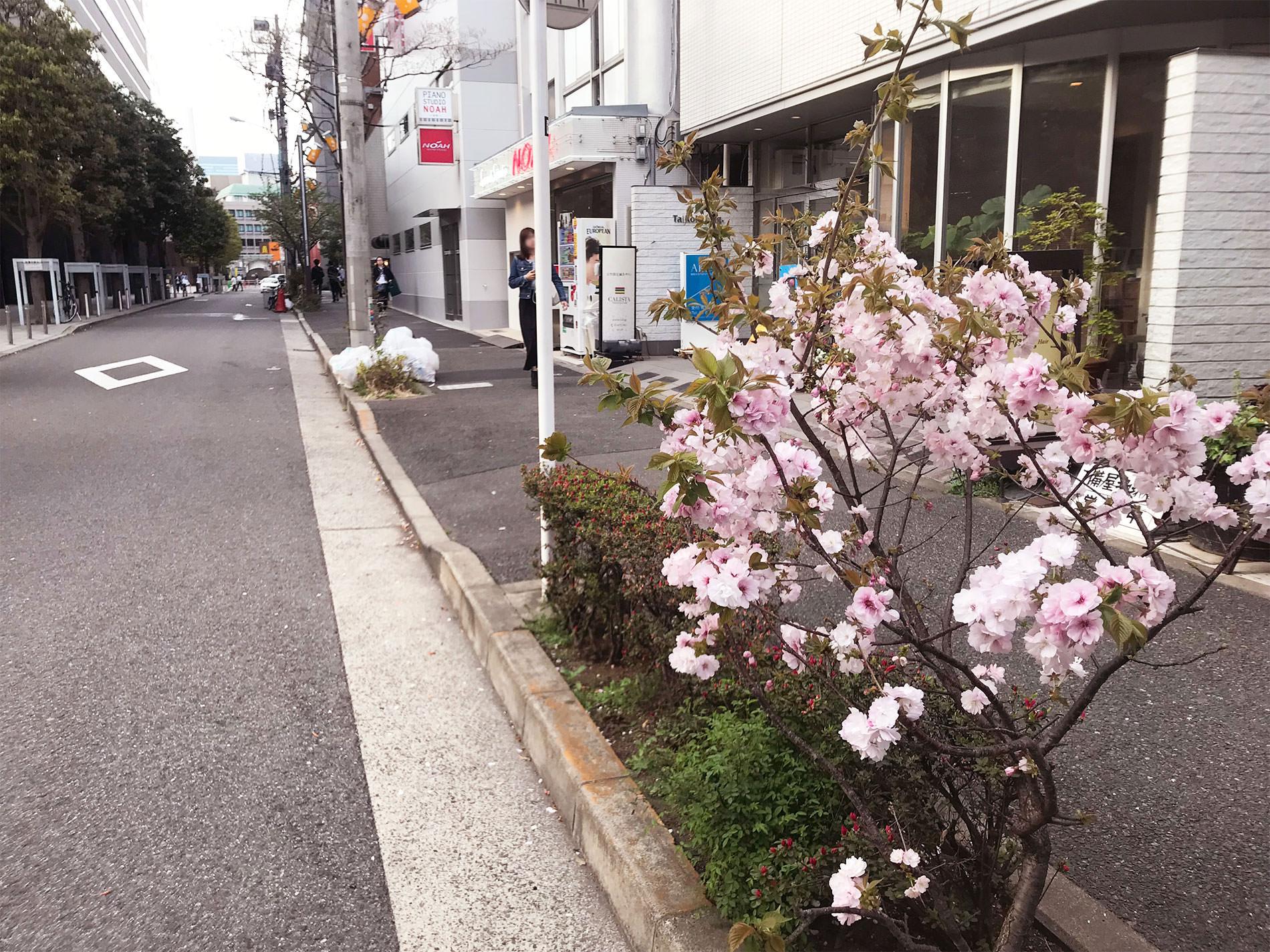 桜 / Cherry Blossoms in Tokyo / 2018