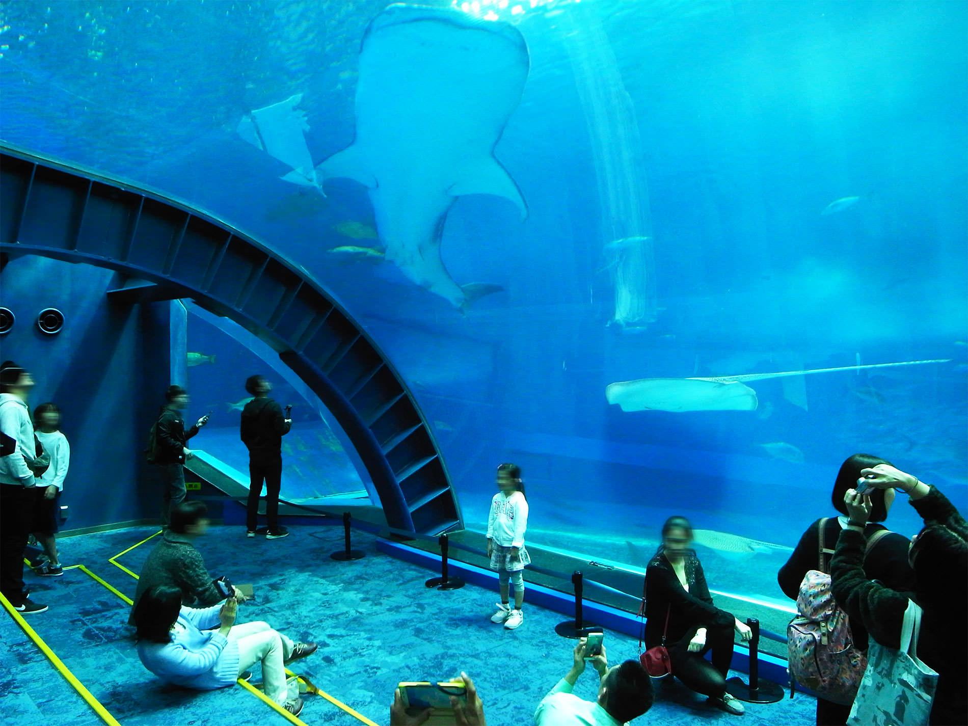 美ら海水族館 / 2018 / Okinawa trip to Okinawa Churaumi Aquarium