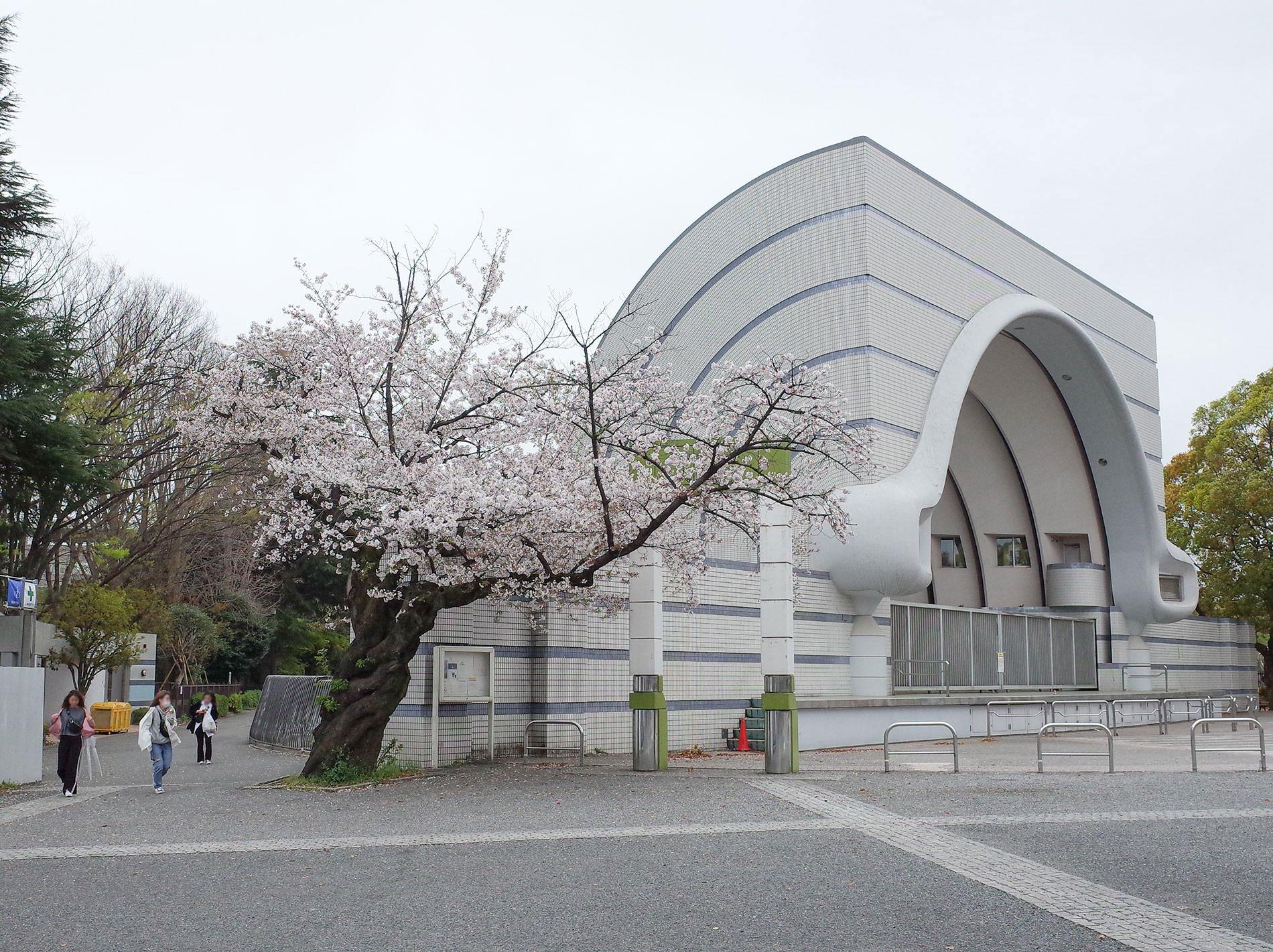 桜 2020 / Cherry Blossom Shibuya Tokyo 2020